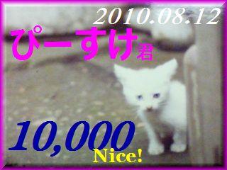 2010.ねこ麻呂 card 10,000 Nice! ぴーすけ君。.jpg