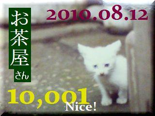 2010.ねこ麻呂 card 10,001 Nice! お茶屋さん。.jpg