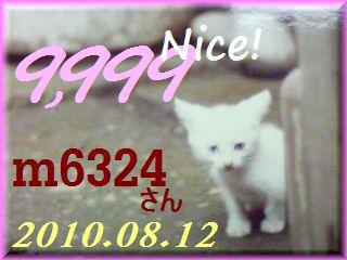 2010.ねこ麻呂 card 9,999 Nice! m6324 さん。.jpg