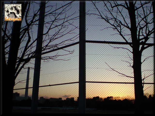 フェンス越しの夕暮れ。c.jpg