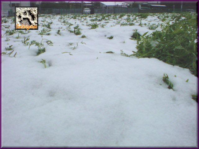 雪、積もる。a.jpg