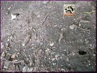 セミ麻呂の穴?2010 a.jpg