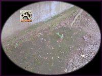 無数の穴。2010 a.jpg
