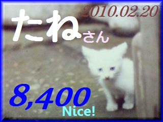 2010.ねこ麻呂 card 8,400 Nice! たねさん。.jpg