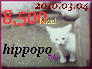 2010.ねこ麻呂 card 8,500 Nice! hippopo さん。.jpg